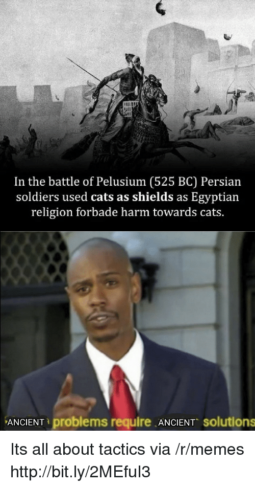 Cats, Memes, and Soldiers: In the battle of Pelusium (525 BC) Persian  soldiers used cats as shields as Egyptian  religion forbade harm towards cats.  ANCIENT problems require ANCIENT solutions Its all about tactics via /r/memes http://bit.ly/2MEfuI3