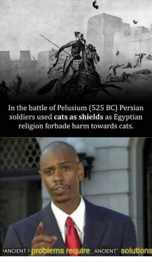 Cats, Memes, and Soldiers: In the battle of Pelusium (525 BC) Persian  soldiers used cats as shields as Egyptian  religion forbade harm towards cats  ANCIENT problems require ANCIENT solutions