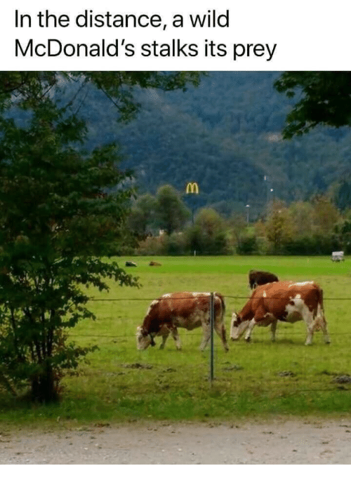 McDonalds, Wild, and Prey: In the distance, a wild  McDonald's stalks its prey