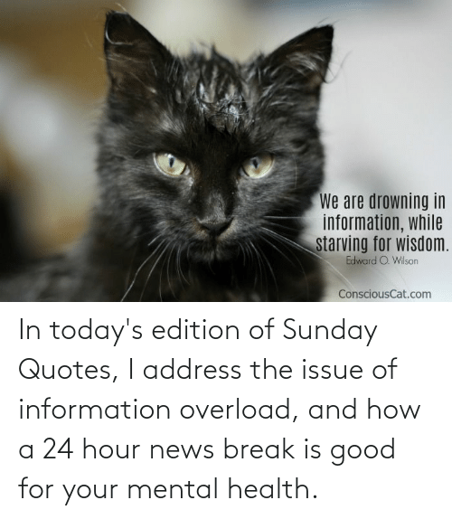 edition: In today's edition of Sunday Quotes, I address the issue of information overload, and how a 24 hour news break is good for your mental health.