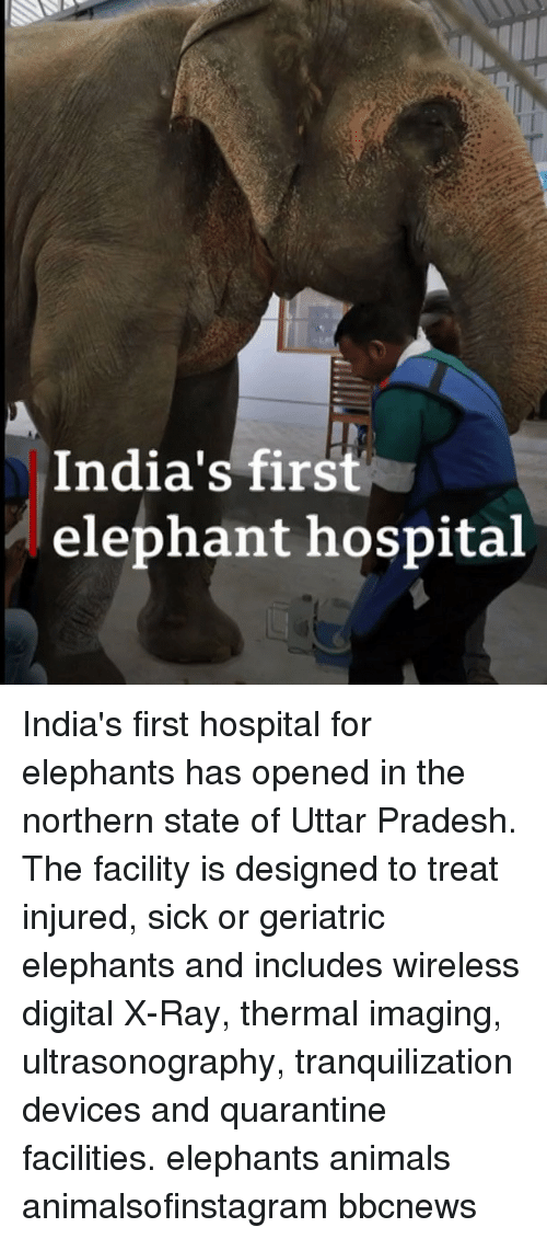 Animals, Memes, and Elephant: India's first  elephant hospital India's first hospital for elephants has opened in the northern state of Uttar Pradesh. The facility is designed to treat injured, sick or geriatric elephants and includes wireless digital X-Ray, thermal imaging, ultrasonography, tranquilization devices and quarantine facilities. elephants animals animalsofinstagram bbcnews