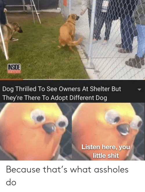 Reddit, Shit, and Dog: INSIDE  adition  Dog Thrilled To See Owners At Shelter But  They're There To Adopt Different Dog  Listen here, you  little shit Because that's what assholes do