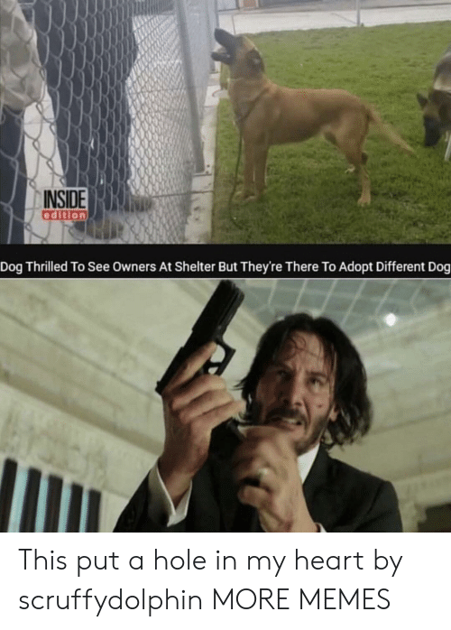 thrilled: INSIDE  edition  Dog Thrilled To See Owners At Shelter But They're There To Adopt Different Dog This put a hole in my heart by scruffydolphin MORE MEMES
