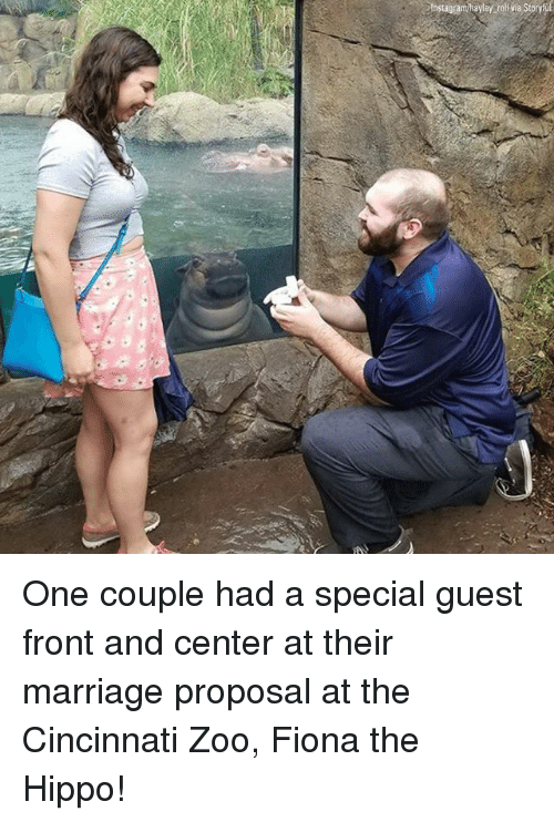 marriage proposal: Instagram/hayley roll va Storyl One couple had a special guest front and center at their marriage proposal at the Cincinnati Zoo, Fiona the Hippo!