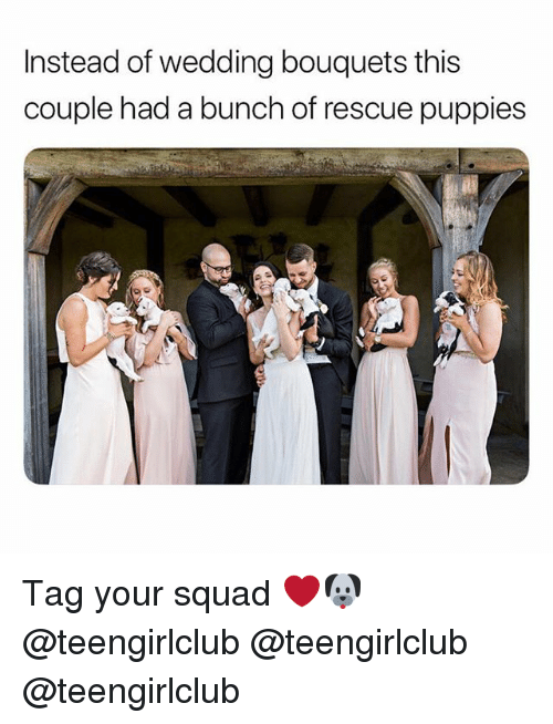Puppies, Squad, and Girl: Instead of wedding bouquets tis  couple had a bunch of rescue puppies Tag your squad ❤️🐶 @teengirlclub @teengirlclub @teengirlclub
