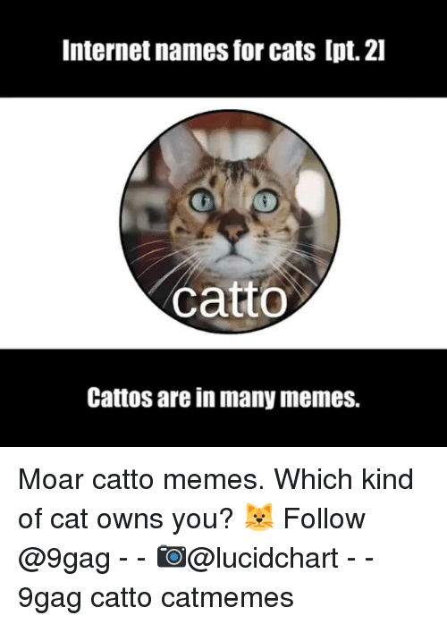9gag, Cats, and Internet: Internet names for cats Ipt. 2l  catto  Cattos are in many memes. Moar catto memes. Which kind of cat owns you? 🐱 Follow @9gag - - 📷@lucidchart - - 9gag catto catmemes