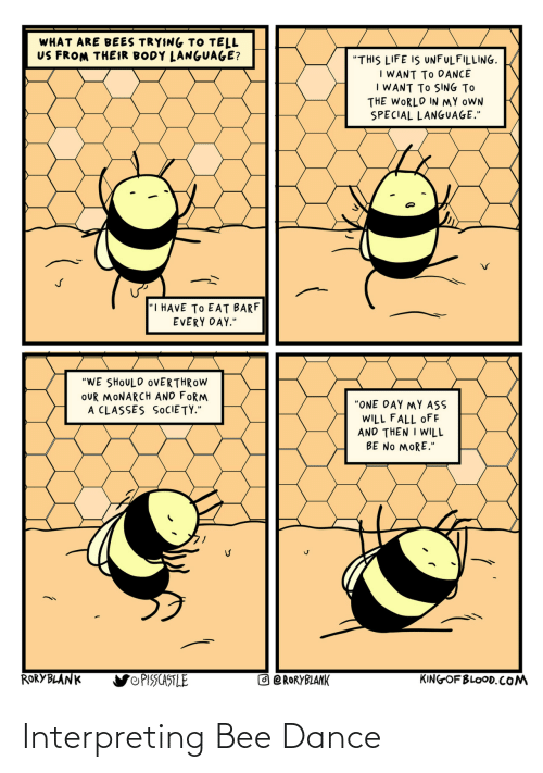 bee: Interpreting Bee Dance