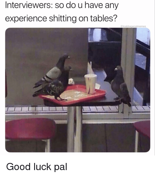 Good, Dank Memes, and Experience: Interviewers: so do u have any  experience shitting on tables?  @tcabbagecatmemes Good luck pal