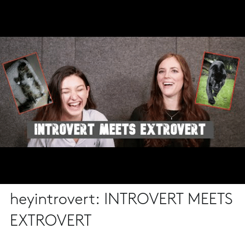 Introvert, Target, and Tumblr: INTROVERT MEETS EXTROVERT heyintrovert: INTROVERT MEETS EXTROVERT