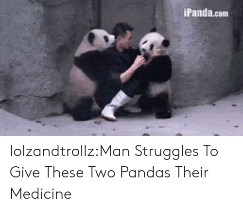 Tumblr, Blog, and Http: iPanda.com lolzandtrollz:Man Struggles To Give These Two Pandas Their Medicine