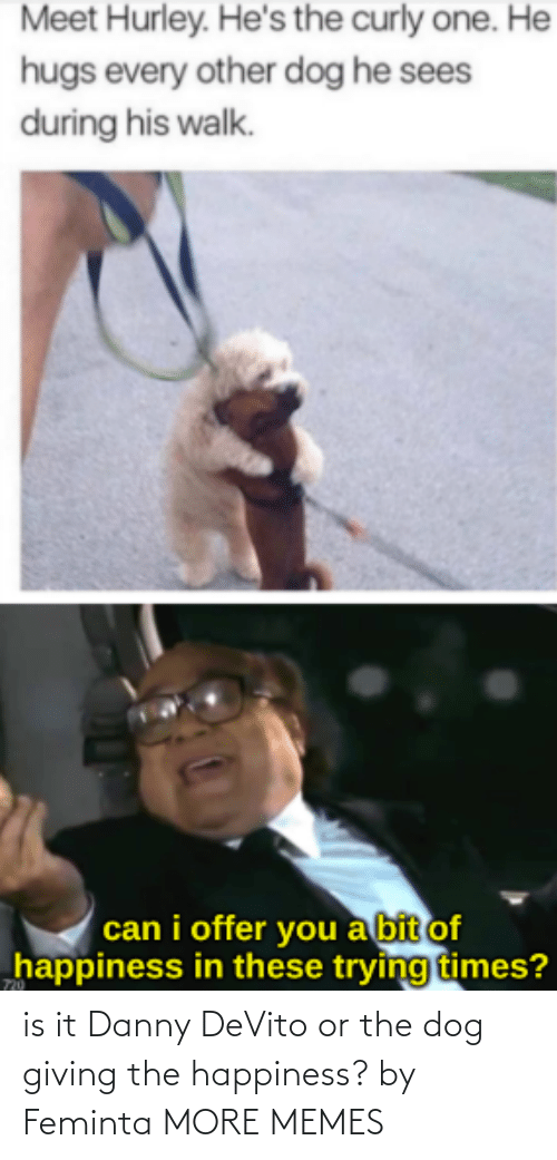 Happiness: is it Danny DeVito or the dog giving the happiness? by Feminta MORE MEMES
