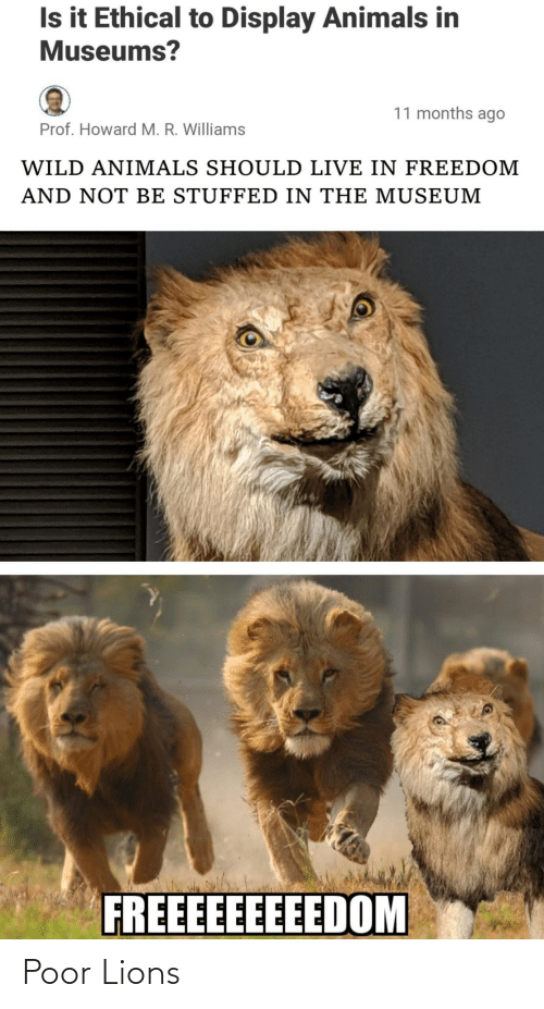 stuffed: Is it Ethical to Display Animals in  Museums?  11 months ago  Prof. Howard M. R. Williams  WILD ANIMALS SHOULD LIVE IN FREEDOM  AND NOT BE STUFFED IN THE MUSEUM  FREEEEEEEEEDOM Poor Lions