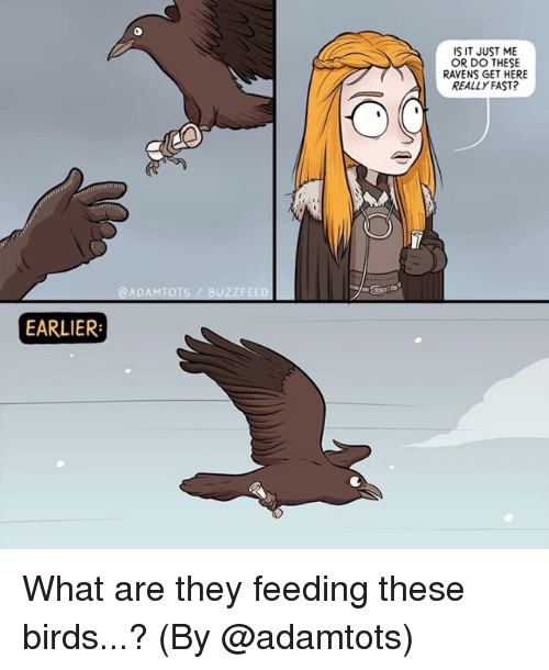 what ares: IS IT JUST ME  OR DO THESE  RAVENS GET HERE  REALLY FAST?  @ADAMTOTS/ BUZZFEED  EARLIER What are they feeding these birds...? (By @adamtots)