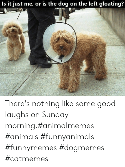 Animals, Good, and Sunday: Is it just me, or is the dog on the left gloating? There's nothing like some good laughs on Sunday morning.#animalmemes #animals #funnyanimals #funnymemes #dogmemes #catmemes