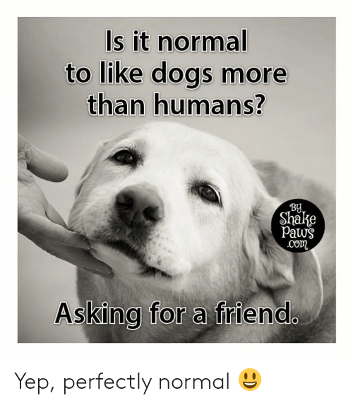 Aww Memes: Is it normal  to like dogs more  than humans?  BU  Shake  Paws  com  Asking for a friend Yep, perfectly normal 😃