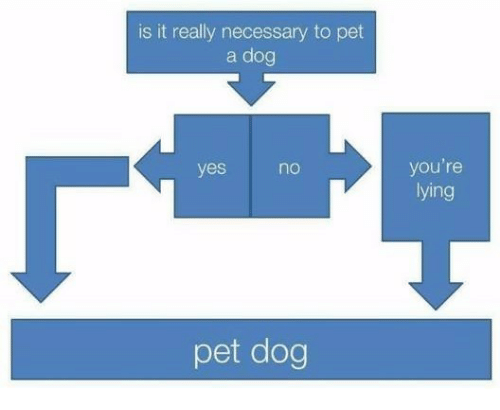 youre lying: is it really necessary to pet  a dog  you're  lying  yes  no  pet dog