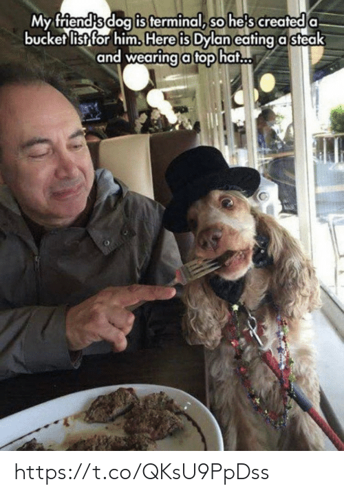 Bucket List, Memes, and 🤖: is terminal, so he's created  My friendsdog a  bucket list for him. Here is Dylan eating a steak  and wearingafophat https://t.co/QKsU9PpDss