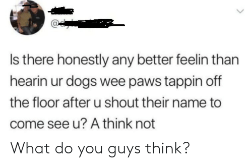 Paws: Is there honestly any better feelin than  hearin ur dogs wee paws tappin off  the floor after u shout their name to  come see u? A think not What do you guys think?