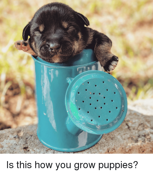 Puppies, How, and Grow: Is this how you grow puppies?