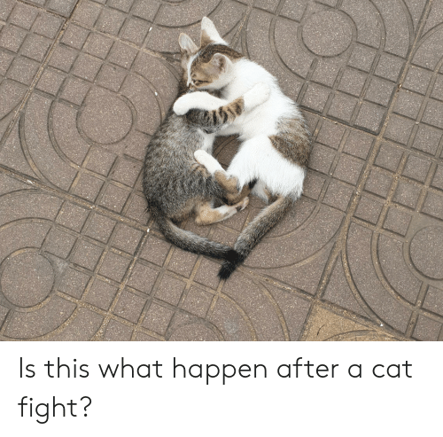 cat fight: Is this what happen after a cat fight?
