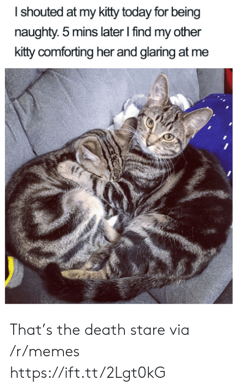Find My: Ishouted at my kitty today for being  naughty. 5 mins later I find my other  kitty comforting her and glaring at me That's the death stare via /r/memes https://ift.tt/2Lgt0kG