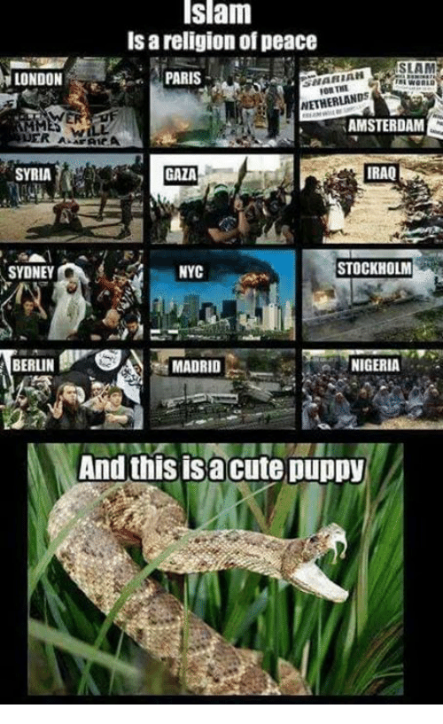 Memes, Puppies, and Amsterdam: Islam  ls religion of peace  SLAM  LONDON  NARIAH  PARIS  NETHERLANDS  AMSTERDAM  RER A  IRAQ  SYRIA  STOCKHOLM  NYC  SYDNE  SA MADRID  BERLIN  NIGERIA  And this is a cute puppy