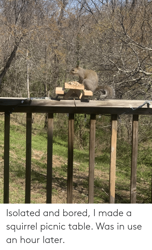 made: Isolated and bored, I made a squirrel picnic table. Was in use an hour later.