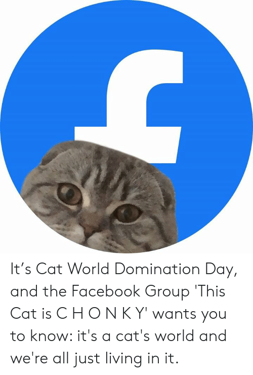 H O: It's Cat World Domination Day, and the Facebook Group 'This Cat is C H O N K Y' wants you to know: it's a cat's world and we're all just living in it.