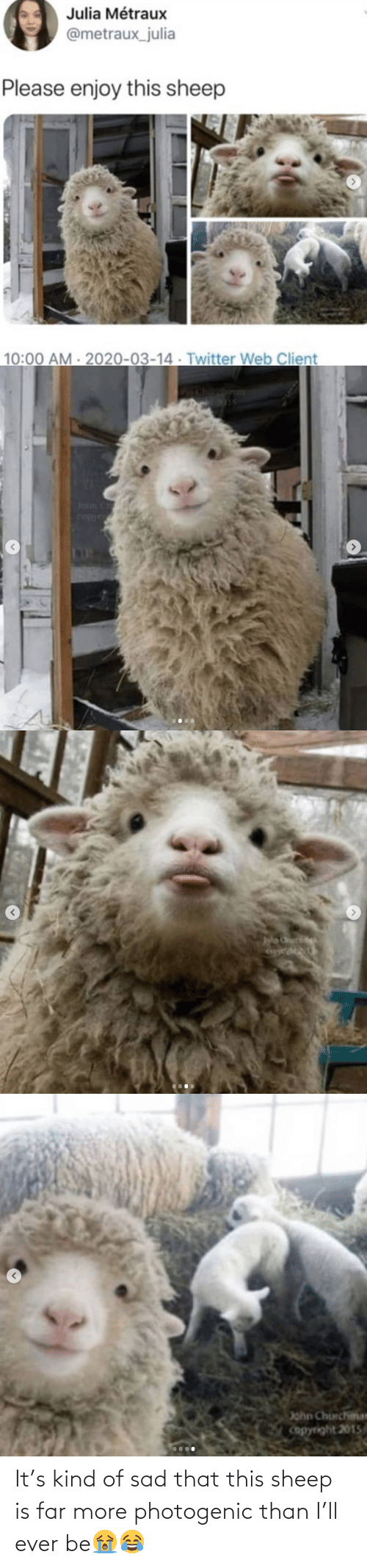 Far: It's kind of sad that this sheep is far more photogenic than I'll ever be😭😂