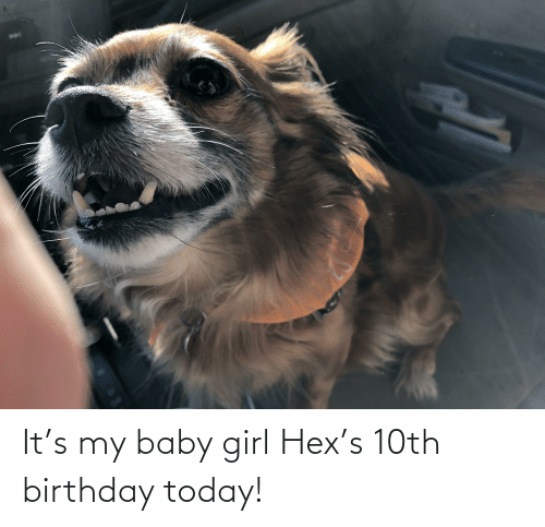 Aww Memes: It's my baby girl Hex's 10th birthday today!