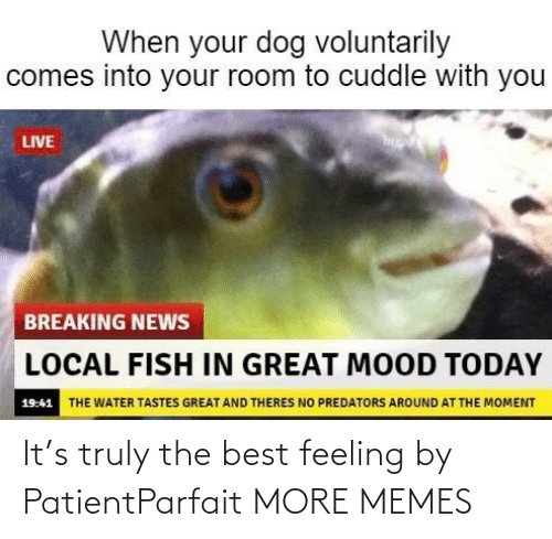 Truly: It's truly the best feeling by PatientParfait MORE MEMES