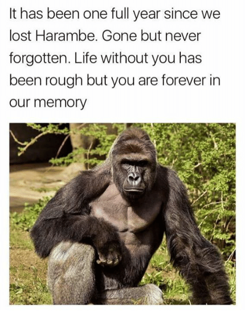 gone but never forgotten: It has been one full year since we  lost Harambe. Gone but never  forgotten. Life without you has  een roU  our memory