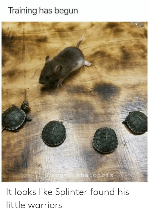 Looks Like: It looks like Splinter found his little warriors