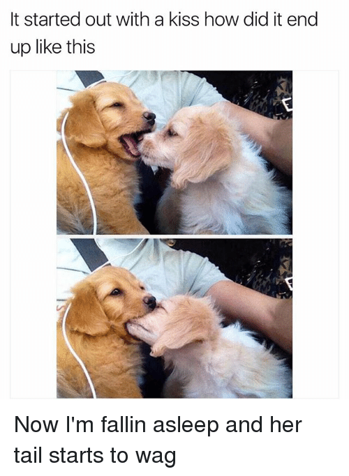 Funny, Kiss, and How: It started out with a kiss how did it end  up like this Now I'm fallin asleep and her tail starts to wag