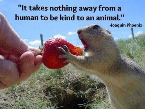 """Memes, Animal, and Phoenix: """"It takes nothing away from  human to be kind to an animal.""""  Joaquin Phoenix"""