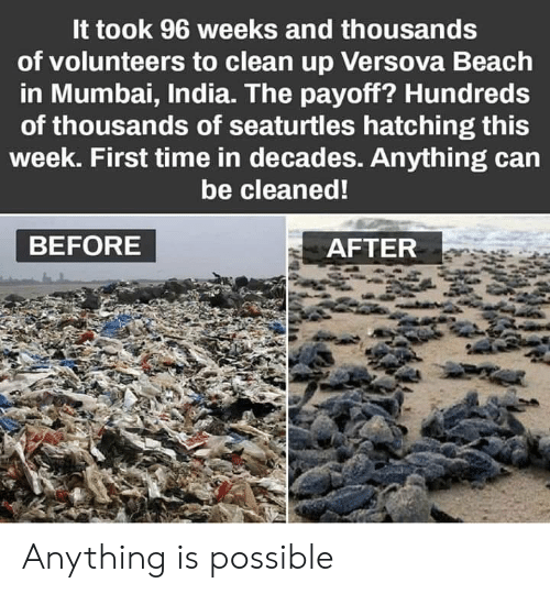 Anything Is Possible: It took 96 weeks and thousands  of volunteers to clean up Versova Beach  in Mumbai, India. The payoff? Hundreds  of thousands of seaturtles hatching this  week. First time in decades. Anything can  be cleaned!  BEFORE  AFTER Anything is possible