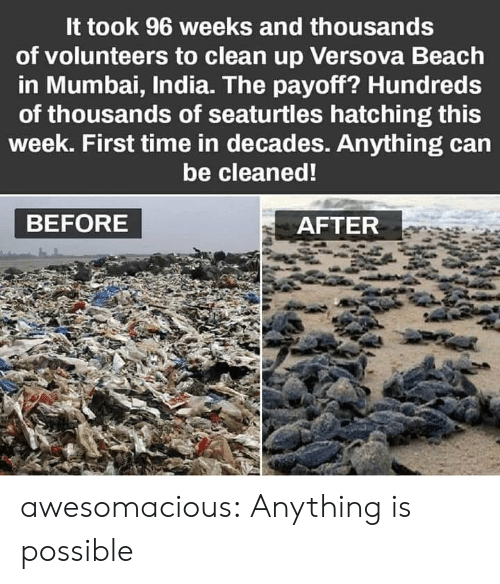 Anything Is Possible: It took 96 weeks and thousands  of volunteers to clean up Versova Beach  in Mumbai, India. The payoff? Hundreds  of thousands of seaturtles hatching this  week. First time in decades. Anything can  be cleaned!  BEFORE  AFTER awesomacious:  Anything is possible