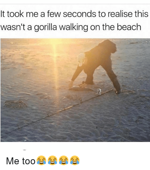 Gorilla Walking: It took me a few seconds to realise this  wasn't a gorilla walking on the beach Me too😂😂😂😂