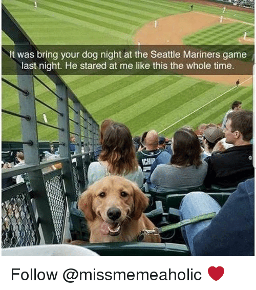 Memes, Game, and Seattle: It was bring your dog night at the Seattle Mariners game  last night. He stared at me like this the whole time  CHIP Follow @missmemeaholic ❤
