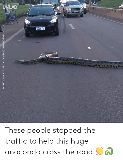 anaconda: ITALO NASCIMENTO FERNANDES VIA VIRALHOG These people stopped the traffic to help this huge anaconda cross the road 👏🐍