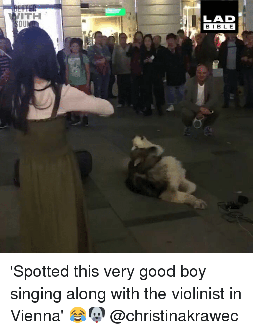 vienna: ITH  OU  LAD  BIBLE 'Spotted this very good boy singing along with the violinist in Vienna' 😂🐶 @christinakrawec