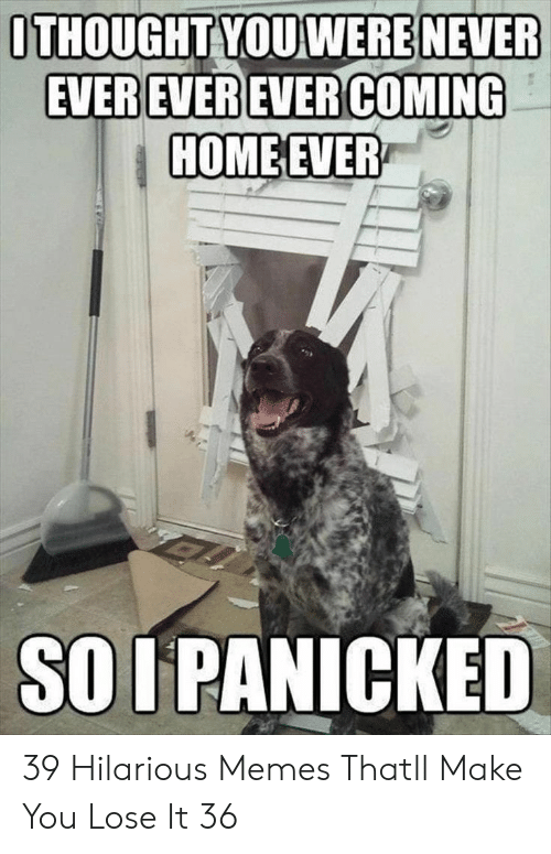 Memes, Hilarious, and Never: ITHOUGHT YOU WERE NEVER  HOMEEVER  SO I PANICKED 39 Hilarious Memes Thatll Make You Lose It 36