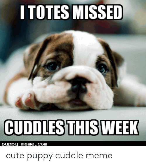 Cute, Meme, and Puppy: ITOTES MISSED  CUDDLES THIS WEEK  puppy-meme.com cute puppy cuddle meme