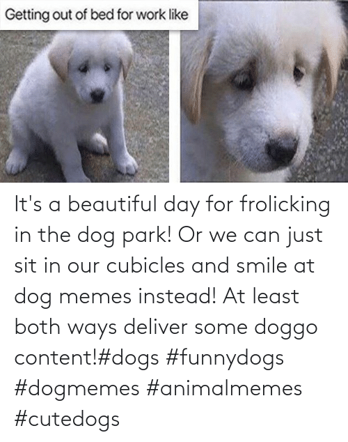 Sit: It's a beautiful day for frolicking in the dog park! Or we can just sit in our cubicles and smile at dog memes instead! At least both ways deliver some doggo content!#dogs #funnydogs #dogmemes #animalmemes #cutedogs