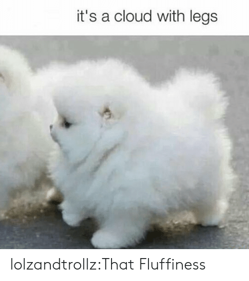 Fluffiness: it's a cloud with legs lolzandtrollz:That Fluffiness