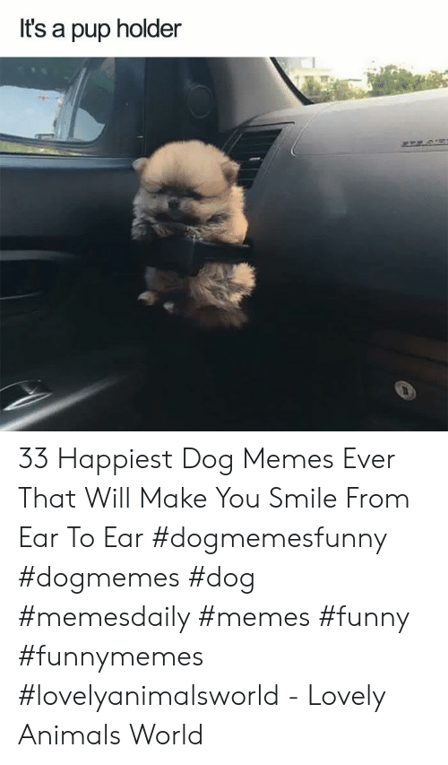 Animals, Funny, and Memes: It's a pup holder 33 Happiest Dog Memes Ever That Will Make You Smile From Ear To Ear #dogmemesfunny #dogmemes #dog #memesdaily #memes #funny #funnymemes #lovelyanimalsworld - Lovely Animals World