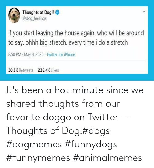 minute: It's been a hot minute since we shared thoughts from our favorite doggo on Twitter -- Thoughts of Dog!#dogs #dogmemes #funnydogs #funnymemes #animalmemes