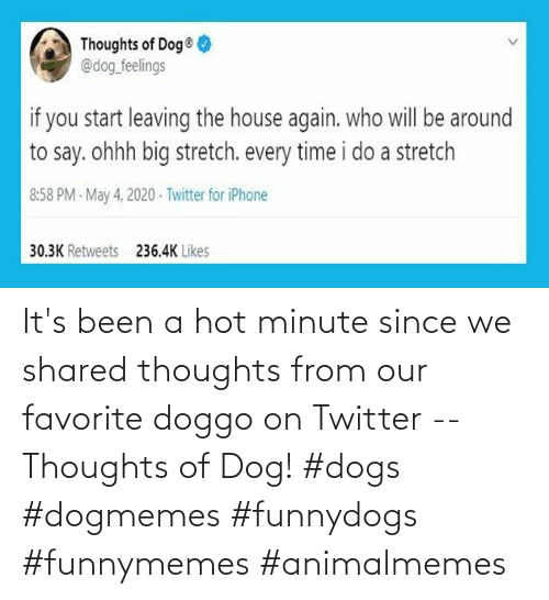 Shared: It's been a hot minute since we shared thoughts from our favorite doggo on Twitter -- Thoughts of Dog! #dogs #dogmemes #funnydogs #funnymemes #animalmemes