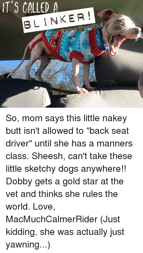 "Gold Star: IT'S CALLED A  BLINKER! So, mom says this little nakey butt isn't allowed to ""back seat driver"" until she has a manners class. Sheesh, can't take these little sketchy dogs anywhere!! Dobby gets a gold star at the vet and thinks she rules the world.   Love, MacMuchCalmerRider   (Just kidding, she was actually just yawning...)"