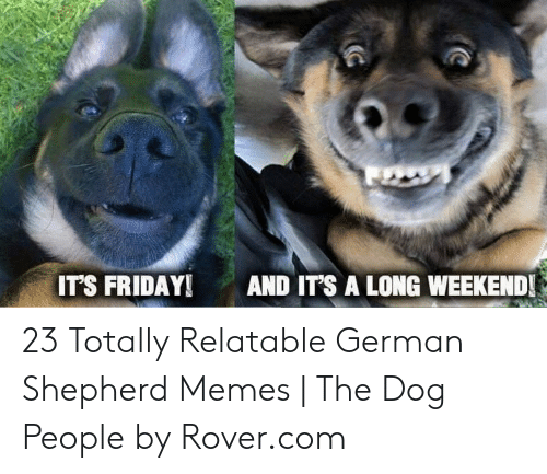 Friday, It's Friday, and Memes: IT'S FRIDAY AND IT'S A LONG WEEKEND 23 Totally Relatable German Shepherd Memes | The Dog People by Rover.com